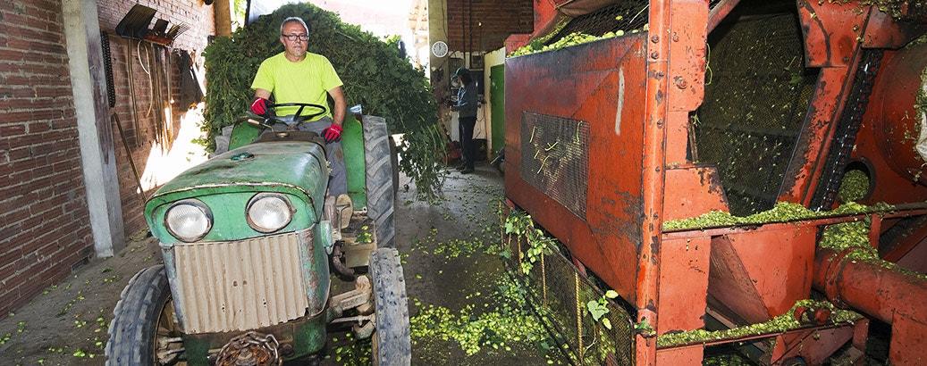 hops farmers production